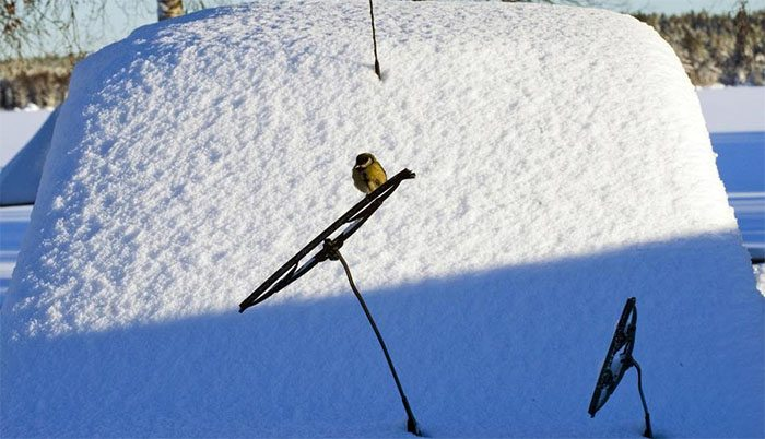 Features of winter wipers choice